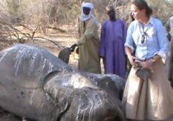 elephant slaughtering