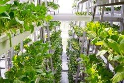vertical farms singapore 1