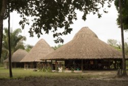 Thatched_roof_houses_in_Guyana-