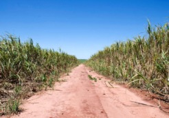 The current boom in sugarcane production is taking over the Guarani's ancestral land © Survival