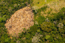 Drug trafficking deforestation