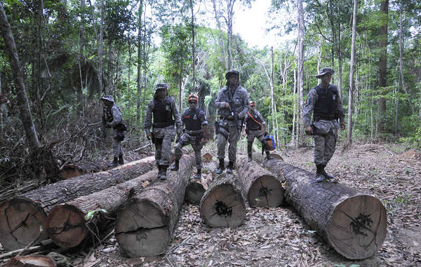 The Brazilian authorities have completed the first stage of their operation to remove illegal loggers and ranchers from Awá land. © Mário Vilela/FUNAI