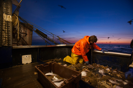 the real cost of fish