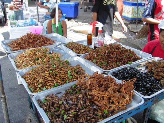 Insect_food_stall