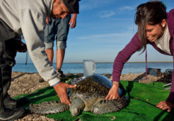 Voluntourism-Sea-Turtles-people-Mexico-Latin-America