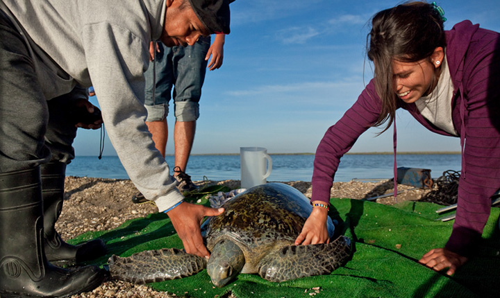 Voluntourism-Sea-Turtles-people-Mexico-Latin-America