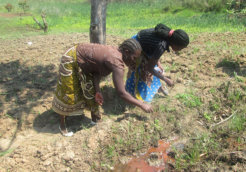 Women-who-form-the-bulk-of-Kenya's-smallholder-farmers-are-bearing-the-brunt-of-changes-in-weather