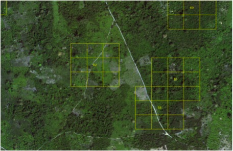 Image of Satellite SPOT analyses by square kilometers of the Congo Basin rainforest carried by the European Commission.