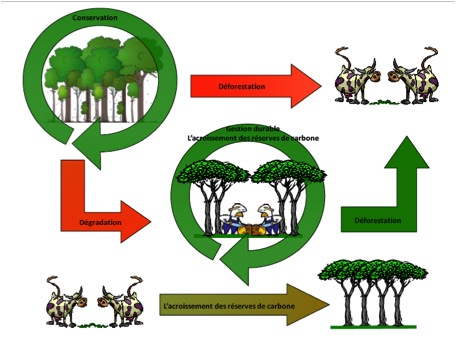Capacity building Illustration from REED+.