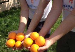 fruit_boroume_480