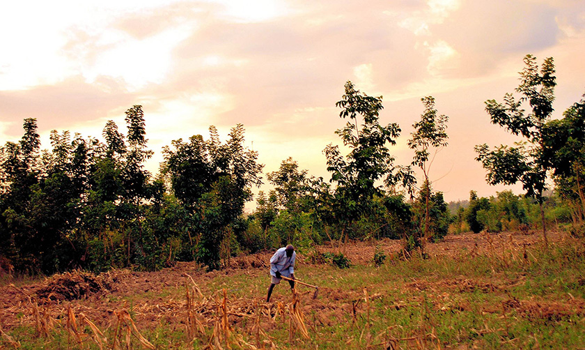 A farmer in Western Kenya tills his land even as he knows the land will produce little or no yields as rains fail.