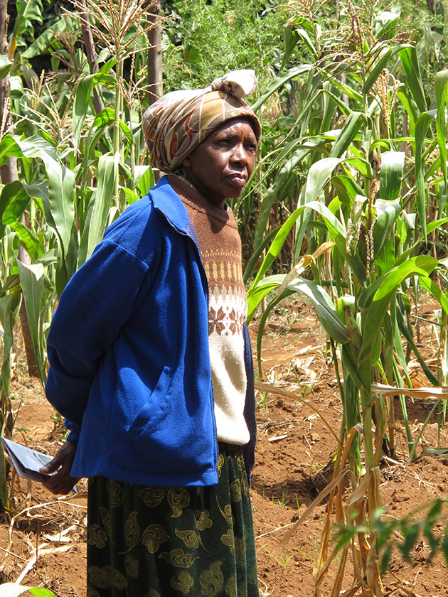 Teresia Kimuhu whose farm has failed to produce to its optimum as a result of failed rains.