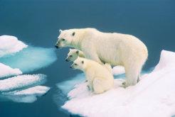 Svalbard family