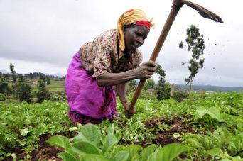 africa agri
