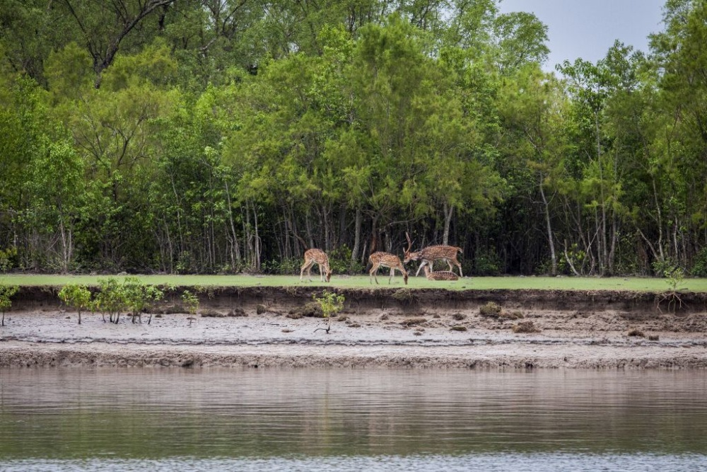 Photos from the Sundarbans mangrove forest.