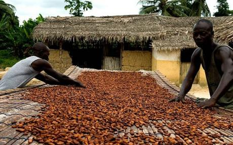 Cocoa farmers in Ghana threaten to blacklist cocoa buying companies over cheating.