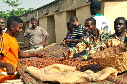 Due to serious financial constraints, most of these indigenous cocoa processing companies are unable to purchase cocoa beans during the main crop season