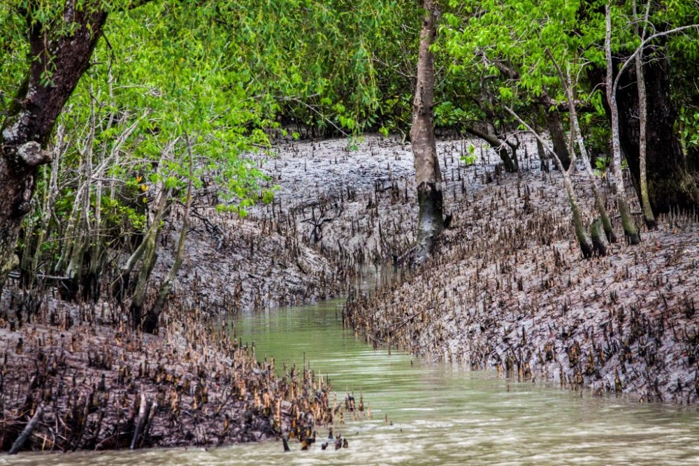 Photos from the Sundarbans mangrove forest.