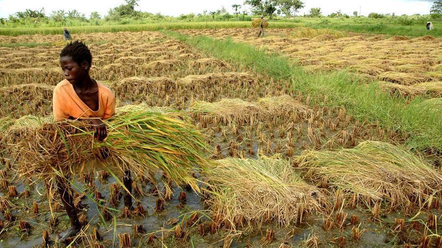 west africa farming
