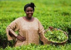 farmer africa