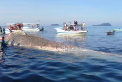 whales ghana