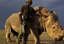 rhino sudan
