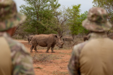 RHINO WITH RANGERS AT FARM 01jpg