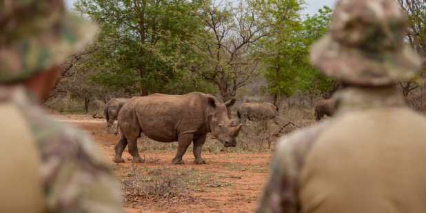 The Iconic Species Of Rhinoceros Fairplanet