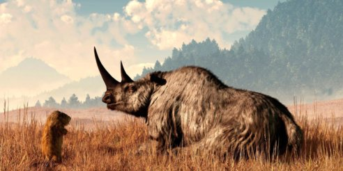 woolly rhino illustration