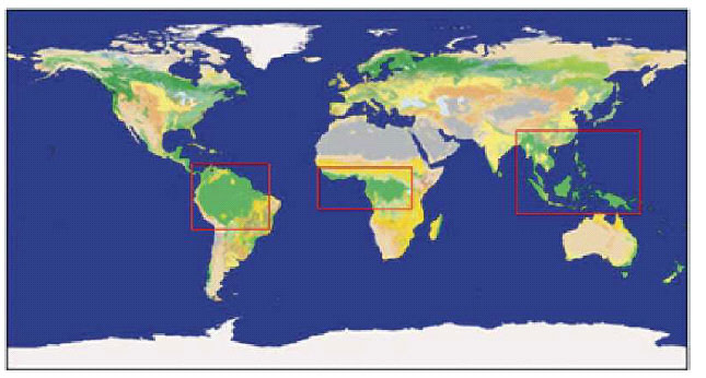 Ongoing and future deforestation of tropical regions.