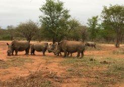 rhino farm 1