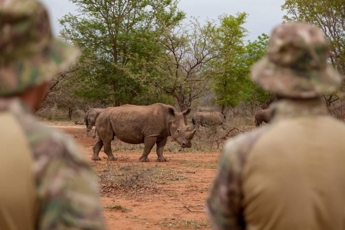 Saving Rhinoceros | FairPlanet
