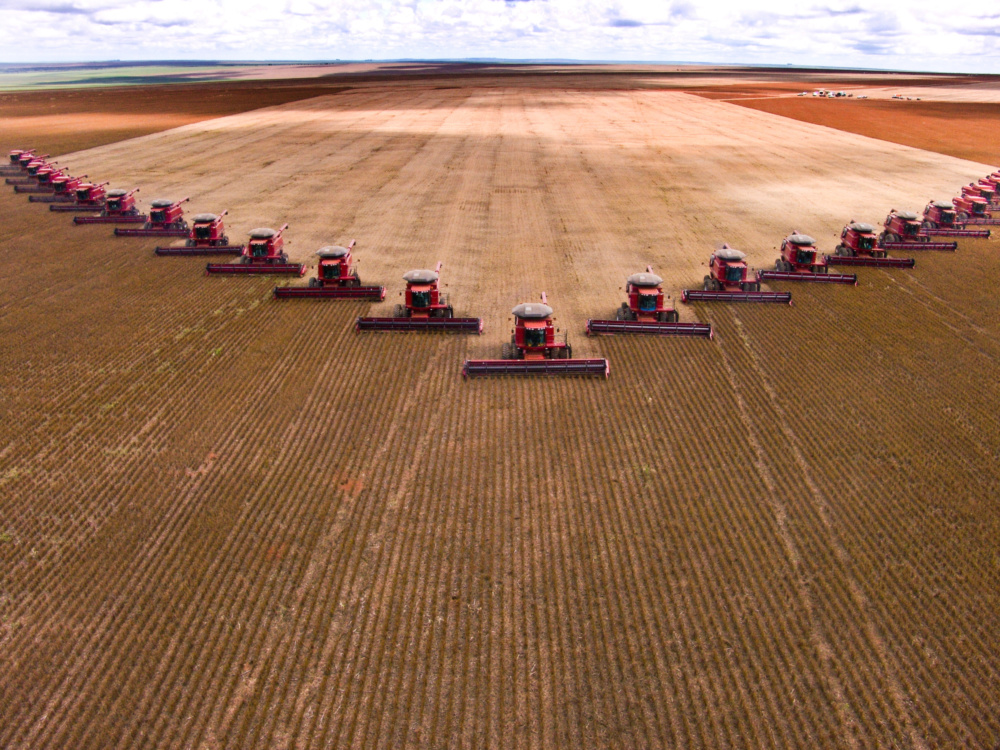 Soy bean harvest in Brazil. Soy is being used as nutrition for live stock.