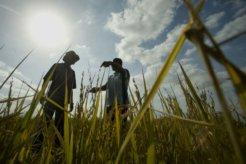 Sudan Agriculture