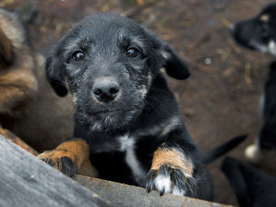 puppy_Russia-Petition_against_dog_killing