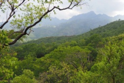 tanzania forest 2