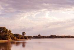 tanzania forest