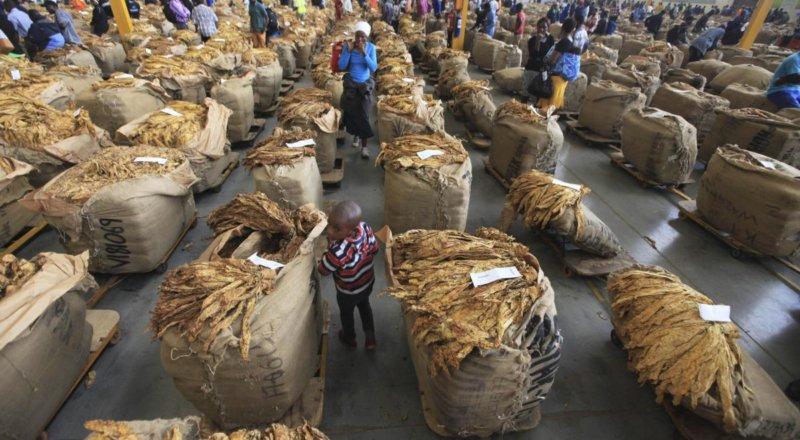 201804africa_zimbabwe_tobacco_photo5