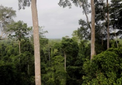 forest ghana