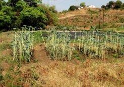 Zimbabwe land