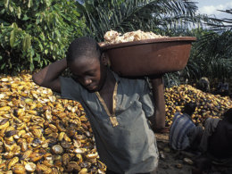 cocoa ghana child labour