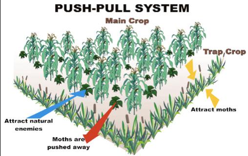 Grafik Push-Pull System (44879 print)