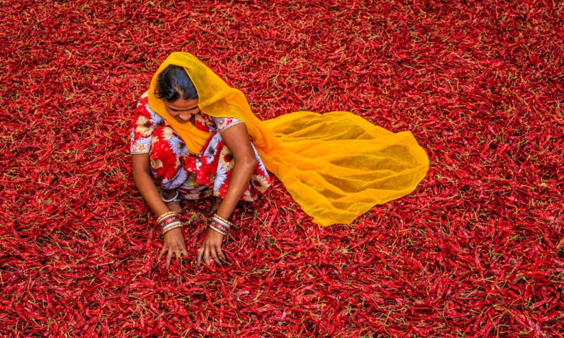 indian woman feed the world