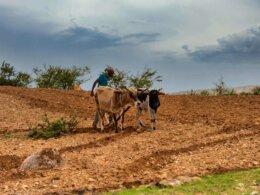 africa_farming