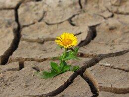 flower-desert