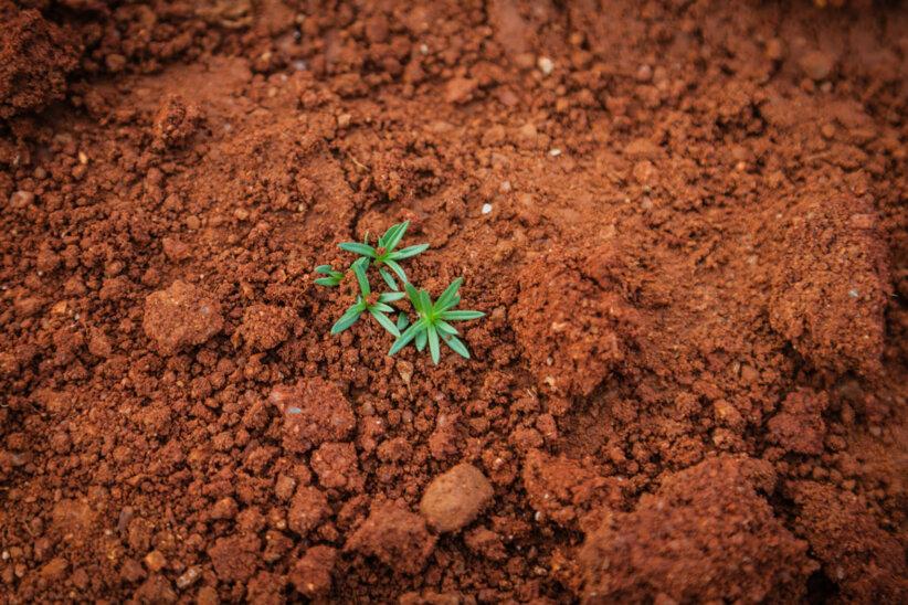 soil-day-fairplanet